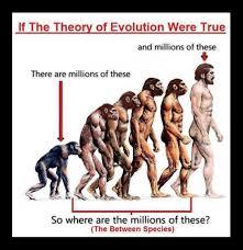 evolusjon2